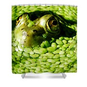 Frog Eye's Shower Curtain