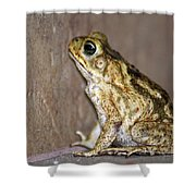 Frog-facing The Wall Shower Curtain by Miguel Hernandez