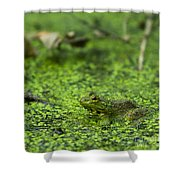 Frog In Swamp 2 Of 3 Shower Curtain