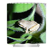 Frog In The Garden Shower Curtain