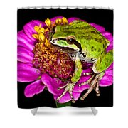 Frog  On Flower Shower Curtain by Jean Noren
