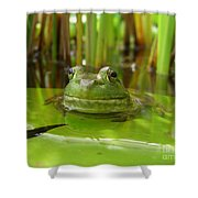 Frog On Lily Pad Shower Curtain