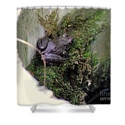 Frog On Moss On Wall Shower Curtain