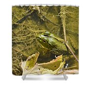 Frog Thinks He's Hidden Under A Twig Shower Curtain
