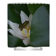 Frog Tucked In A Water Lily Shower Curtain