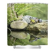 Bull Frog On A Rock Shower Curtain
