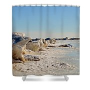 Froggy Shower Curtain