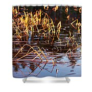 Froggy Sunset Shower Curtain