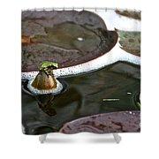 Froggy Throne Shower Curtain