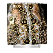 Frogs Back Shower Curtain