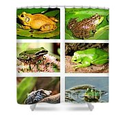 Frogs - Boxed Cards Shower Curtain