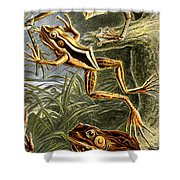 Frogs Detail Shower Curtain