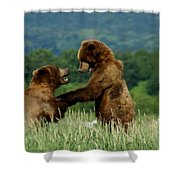 Frolicking Grizzly Bears Shower Curtain