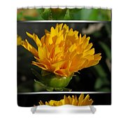 From Bud To Bloom - Coreopsis Named Early Sunrise Shower Curtain