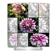 From Bud To Bloom - Dahlia Named Brian Ray Shower Curtain