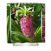 From Bud To Bloom - Eucomis Named Leia Shower Curtain