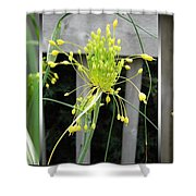 From Bud To Bloom - Fireworks Allium Shower Curtain