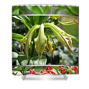 From Bud To Bloom - Gloriosa Named Rothschildiana Shower Curtain