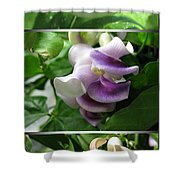 From Bud To Bloom - Phaseolus Caracalla Shower Curtain