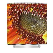 From Bud To Bloom - Sunflower Shower Curtain