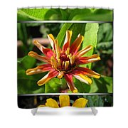 From Bud To Bloom - Zinnia Shower Curtain