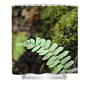 Frond Shower Curtain