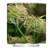 Fronds By Jammer Shower Curtain