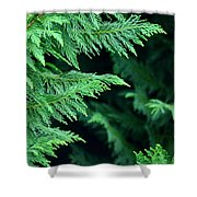 Fronds Of The Leyland Cypress Shower Curtain