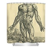 Front Of Male Human Body.anatomical Shower Curtain