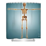 Front View Of Human Skeletal System Shower Curtain