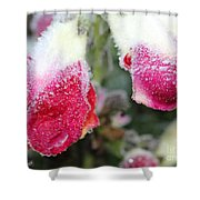 Frost Bears Down On Snapdragon Named Floral Showers Red And Yellow Bicolour Shower Curtain
