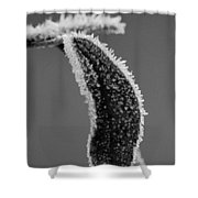 Frost Bw Shower Curtain
