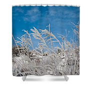 Frost Covered Grasses Against The Sky Shower Curtain