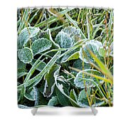 Frost On Strawberry Leaves Shower Curtain