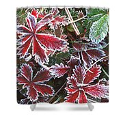 Frost On Wild Strawberry Shower Curtain