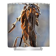 Frosted And Wilted Shower Curtain