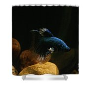 Frosted Fins Shower Curtain