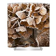 Frosted Hydrangea Shower Curtain