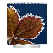 Frosted Leaf Shower Curtain