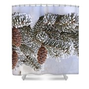 Frosted Pine Tree And Cones 1 Shower Curtain