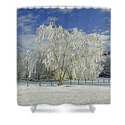 Frosted Trees - Newton Road Park Shower Curtain