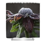 Frosty Black Eyed Susan Shower Curtain