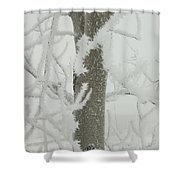 Frosty Branches Shower Curtain