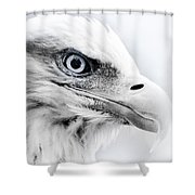 Frosty Eagle Shower Curtain