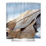 Frosty Leaves In The Morning Sunlight Shower Curtain