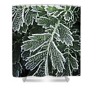 Frosty Leaves Macro Shower Curtain