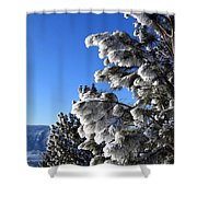 Frosty Limbs Shower Curtain