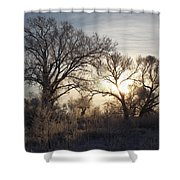 Frosty Morn 4 Shower Curtain