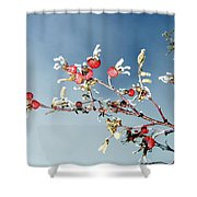 Frosty Morn Shower Curtain