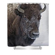 Frosty Morning Bison Shower Curtain